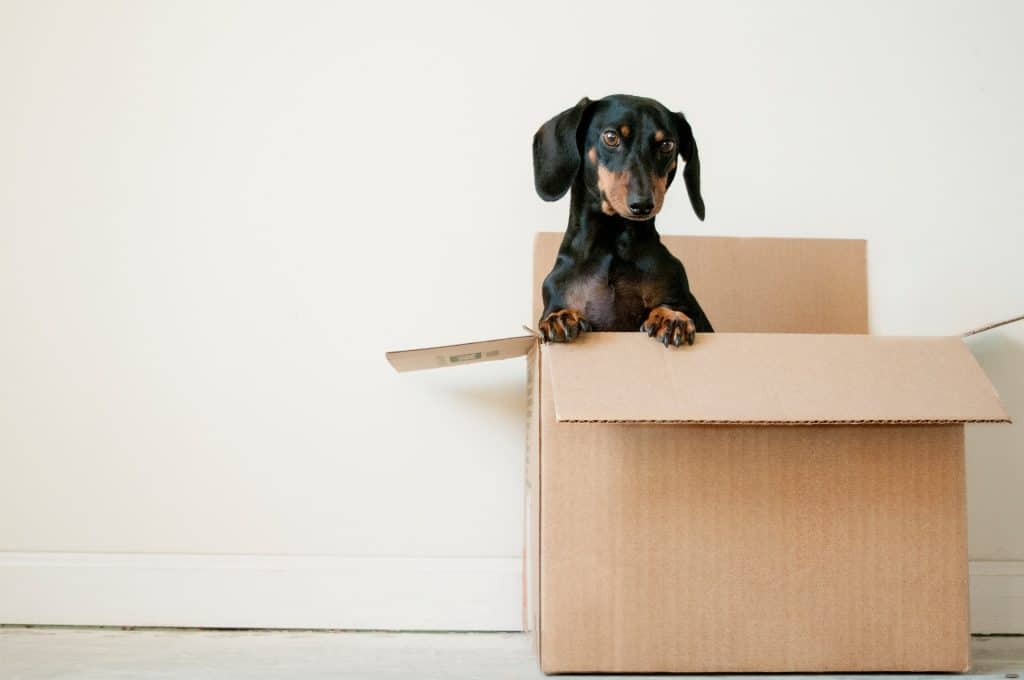 are dachshunds good for first time owners